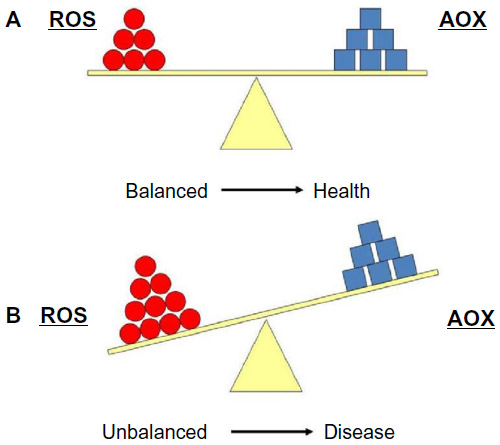 More reactive oxygen species or less antioxidant defences leaves the body vulnerable to disease